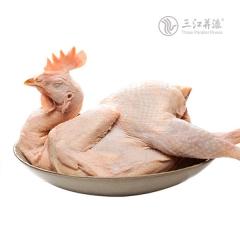 (热鲜批发)白羽鸡 (一袋≥24kg) 公母混装