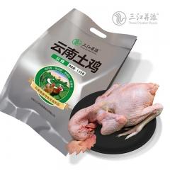 三江并流 茶花鸡(母鸡)